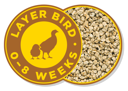 Layer Bird 0-8 Weeks