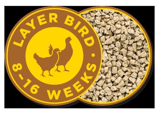 Layer Bird 0-8 Weeks